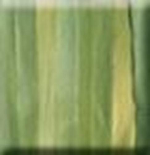 Picture of 4mm Silk Ribbon - 4b Fern