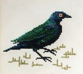 Picture of Glossy Starling