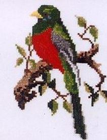Picture of Narina Trogon