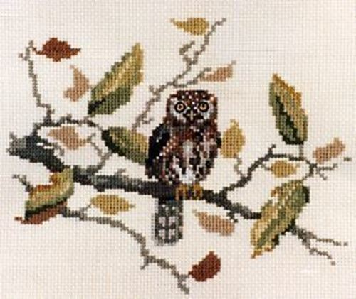 Picture of Pearl Spotted Owl
