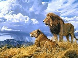 Picture of Lions
