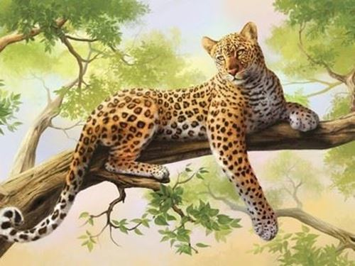 Picture of Leopard in Tree