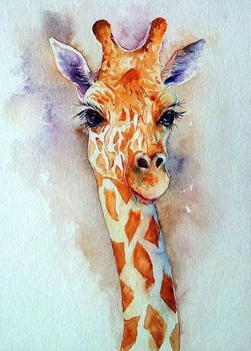 Picture of Baby Giraffe