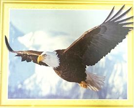 Picture of Flying Eagle