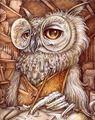 Picture of Professor Owl