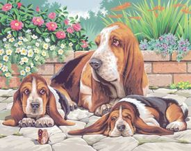 Picture of Basset Hounds