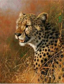 Picture of Cheetah Profile