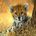 Picture of Cheetah Cub