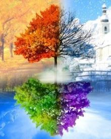 Picture of 4 Seasons Tree