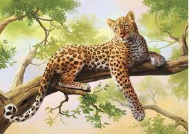 Picture of Leopard Gaze