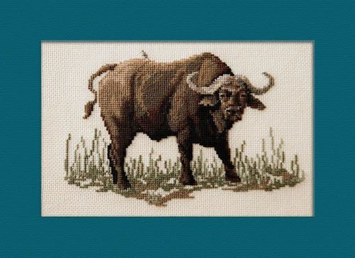 Picture of Buffalo