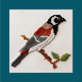 Picture of Cape Sparrow