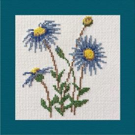 Picture of Blue Felicia Daisy