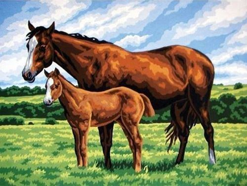 Picture of Horse with Colt