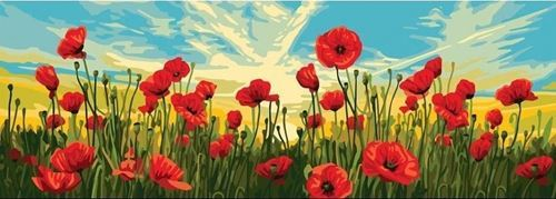Picture of Poppies in Sunset