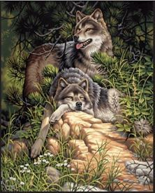 Picture of Wild and free wolves
