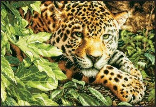Picture of Leopard in Repose
