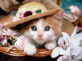 Picture of Cute Kitten