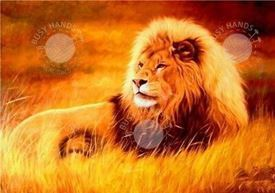Picture of Lion