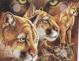 Picture of Lions Waiting