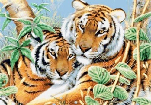 Picture of Tiger Pair